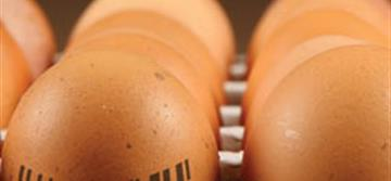 Egg Grader and Supplier Tracks Millions of Eggs with Datalogic's PowerScan™ Readers